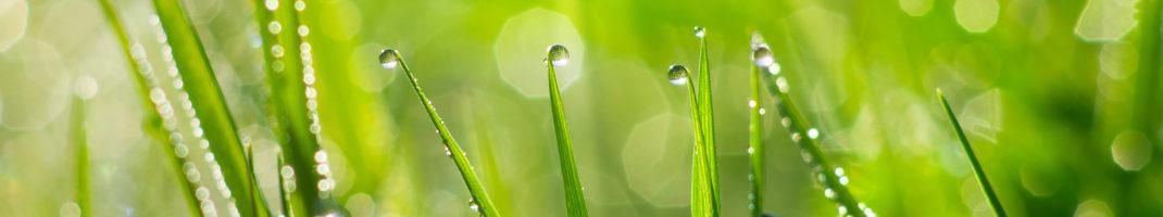 planta para homeopatía